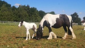 A rescued horse and her foal